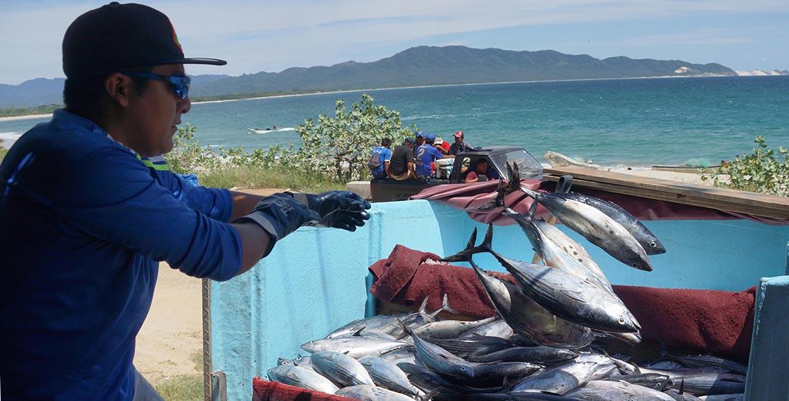 Semar, sólo una parte de la solución contra la pesca ilegal: Oceana México