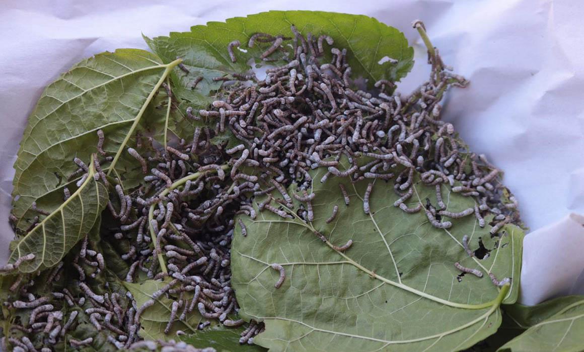 El nuevo Santuario del gusano de seda en San Pedro Cajonos