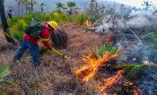 Dañan 69 incendios más de 3 mil hectáreas en Oaxaca