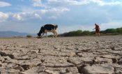 Hay sequía en 43 municipios de Oaxaca