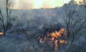 Continúan activos 3 incendios forestales en la Costa y la Mixteca